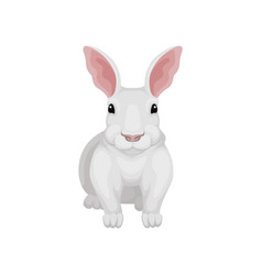 flat icon of white rabbit front view wild vector image