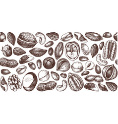 nuts design hand drawn pecan macadamia pine nuts vector image