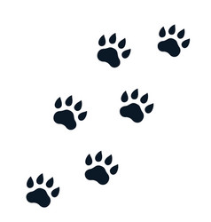 Paw footprints on white vector