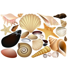 Shell collection vector image
