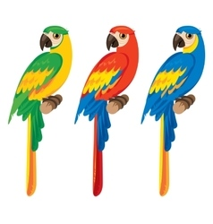 three parrots macaws vector image