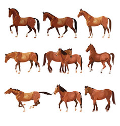 horses in various poses vector image