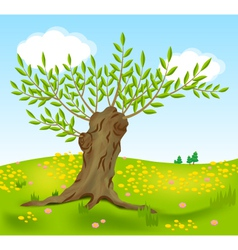 old willow vector image vector image