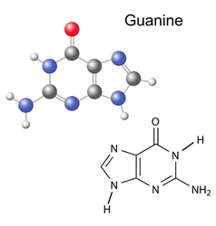 Chemical structural formula and model of guanine vector