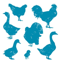 Poultry vector image