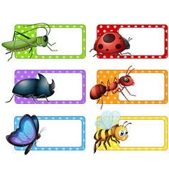 Square labels and many insects vector image vector image