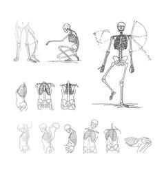concept of skeleton black on vector image
