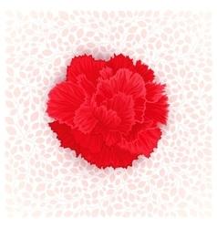 Flower of Carnation vector