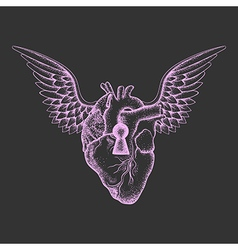 Hand drawn elegant anatomic human heart with wings vector