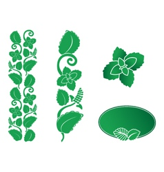 mint ornament vector image