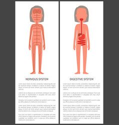 Nervous and digestive systems woman s anatomy vector