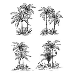 Set tropical palm trees with leaves vector