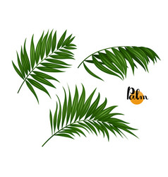 Three palm leaves set vector
