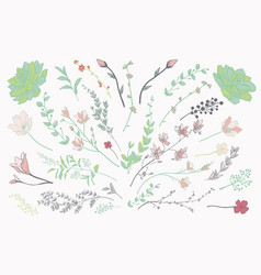 colorful drawn herbs plants and flowers vector image vector image