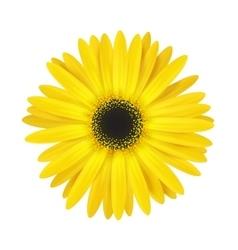 Bright spring flower vector