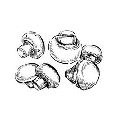 champignon white button mushrooms hand drawn vector image
