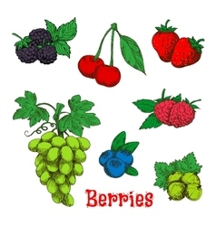 Colorful appetizing fruits and berries sketches vector image