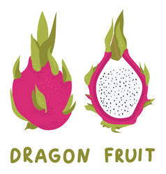Hand drawn whole dragon fruit and half vector