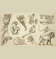 monkeys - an hand drawn pack line art vector image
