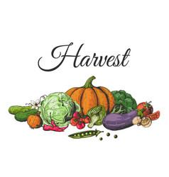 Colored drawn vegetables food sketch vector