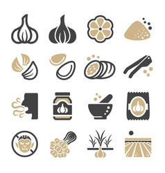 garlic icon vector image