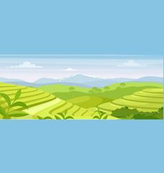 green tea plantation landscape vector image