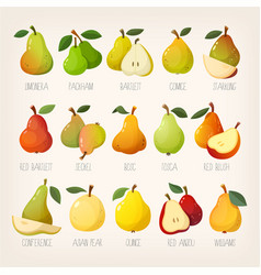 kinds pears vector image