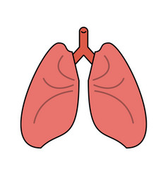 Lungs cartoon icon image vector
