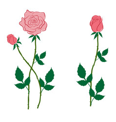 Pink rose and buds in the style of flat vector