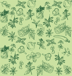 seamless background with herbs vector image vector image