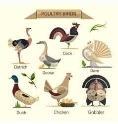 Farm birds set in flat style design vector image