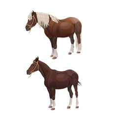 Riding and draft horses vector