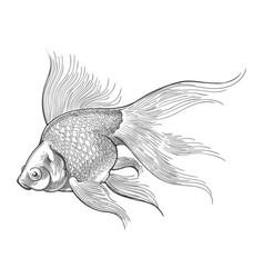 goldfish vintage sketch vector image
