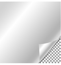 white gradient paper curl with shadow isolated on vector image