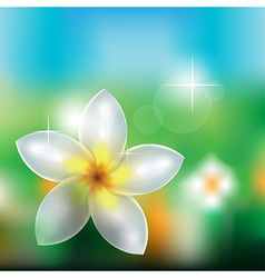 Flowers in nature vector image vector image