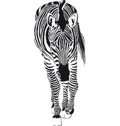 going zebra vector image