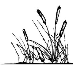Pond Reeds vector image