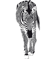 the going zebra vector image