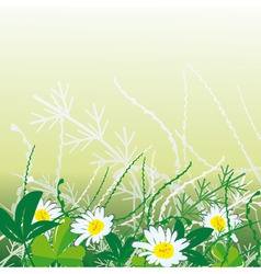white camomiles in green grass vector illustration vector image