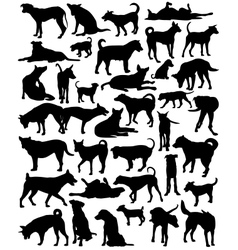 Street dogs vector image vector image
