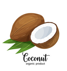 Coconut in cartoon style vector