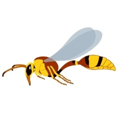 Realistic Wasp vector image