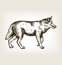 Wolf animal engraving vector