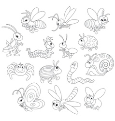 Insects vector image vector image