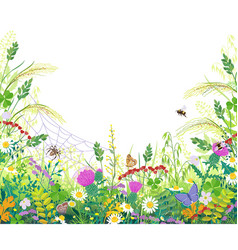 colorful frame with summer meadow plants spider vector image