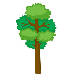 tall tree on white background vector image