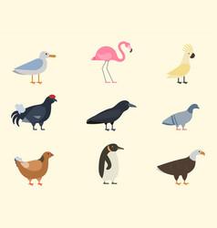 bird species collection different vector image