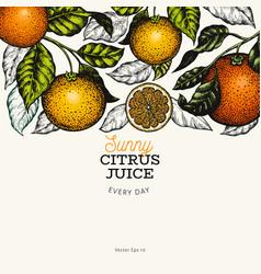 citrus design templete hand drawn colour fruit on vector image