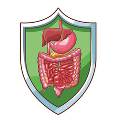 Digestive system well working vector