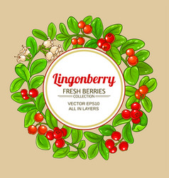 lingonberry branches frame vector image